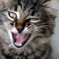 なぜ猫は『きゅうり』を見ると驚くの?その理由とやってはいけない行…