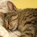 猫用ペットシーツの使い方とメリット・デメリット