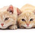 2匹目の猫をお迎えする時の準備やコツ