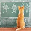 猫はブリを食べても大丈夫?健康への影響や食べてしまったときの対処…