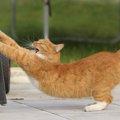 猫が伸びる『体の仕組み』と4つのタイミング