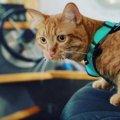 小脳形成不全の猫…病に負けず初ビーチを楽しむ!