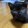 衰弱して命の危険が迫る子猫…でも預かり先がない!そこで…