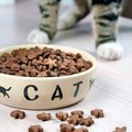 普段の食事と何が違うの?猫が療法食を食べる際の注意点