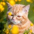 死んだ猫は飼い主に会いに来る?不思議な体験談3選