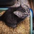 猫が頻繁にトイレに行く4つの原因と対処法