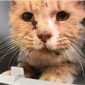 泥だらけで発見された猫、保護され一晩で運命が激変!