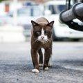 『どら猫』の意味とは?語源と野良猫との違い