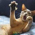 猫が気になるもの5つ!命の危険があるものには事故防止対策