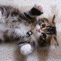 【研究で明らかに】人間はなぜ猫を「可愛い」と感じるのか?その秘密…