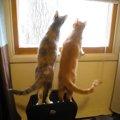 猫が二匹仲良く外を見ていたら…