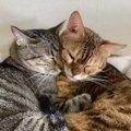 先住猫と新入り猫が心を許し合ったときにする仕草や行動3つ