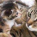 猫が流産した時の対処法や症状、原因、予防法まで