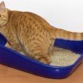 猫トイレの種類を変えたい!切替える3つのポイント