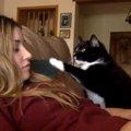 自分だけを見て欲しい飼い主さんラブな猫ちゃん