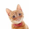 子猫に首輪をつけることの良い点と悪い点とは