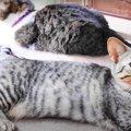 いろんなポーズが可愛い♡女子猫さんたちの後ろ足のクセがすごい