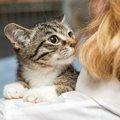 猫が髪の毛を狙ってくる理由と対処法