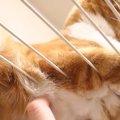 ケージの網からはみ出たふわふわ猫さんを下からモフる♡