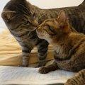 信頼していた保護主の突然の死。兄弟猫は寂しさを乗り越え幸せ探し中