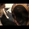 初対面の子猫に威嚇されて戸惑う猫ちゃん