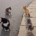 猫好きにはたまらない!世界6大猫スポット福岡県にある「相島」をリ…