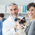 猫に抗生物質が必要な理由とリスクについて