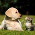 猫は頭悪いのか、知能指数と能力の高さについて