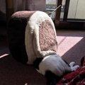 猫のベッドの選び方と手作りの方法について