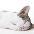 猫が長生きするための3つの秘訣と寿命