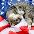 日本では鍵しっぽが多いけど、アメリカでは○○の猫が多い!?