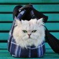 猫をスリングを使って移動する時の4つの利点とおすすめ商品