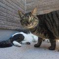 猫を保護したらどうすればいい?その後の飼い方や飼えない時の対処法