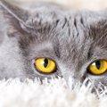 猫の目やにが片目だけに付いている原因と対策