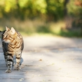 猫が帰ってこない場合の探し方のコツ