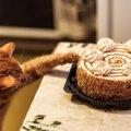 飼い主の食べ物を横取りする猫!対策できる5つの事