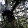 木の上で悲痛な鳴き声を上げる猫…救助の行方は?