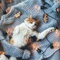 猫の飼育グッズ解説!飼い始めに必要な物からあると便利なものまで