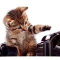 佐藤健さんは大の猫好き!猫と共演した主演映画とは