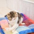 猫と暮らせる物件だけを紹介してくれる『ネコリパ不動産』