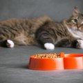 猫がご飯をすぐ食べないのはどうして?気持ちや対処法