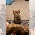 【爆笑】ママ猫のお乳を取られちゃった「子猫」の顔がじわる
