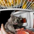 猫はお肉と魚どっちが好き?意外と知らなかった豆知識