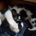 自分のベッドの下で突然、野良猫が出産したら…あなたはどうしますか?