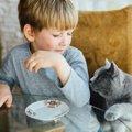 猫が飼い主の『浮気』を察知した時にする仕草や行動6つ