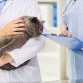 猫の角膜炎!早期発見で重症化を防ぐ