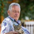 猫の扁平上皮癌の症状と原因、その治療と費用