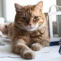 猫の老化を判定する5つの行動
