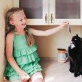 猫がにぼしを食べると発病するかもしれない病気4つ