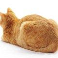 猫が不機嫌な理由とその時飼い主がするべき4つの事